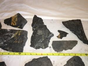 Fern Fossils j
