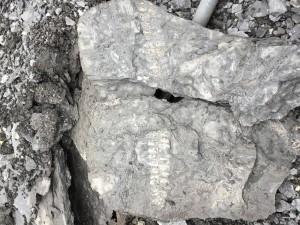 Fern fossil 12