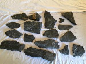 Fern fossils a