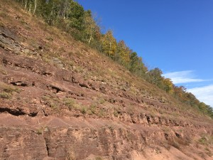 Red Hill Fossils d