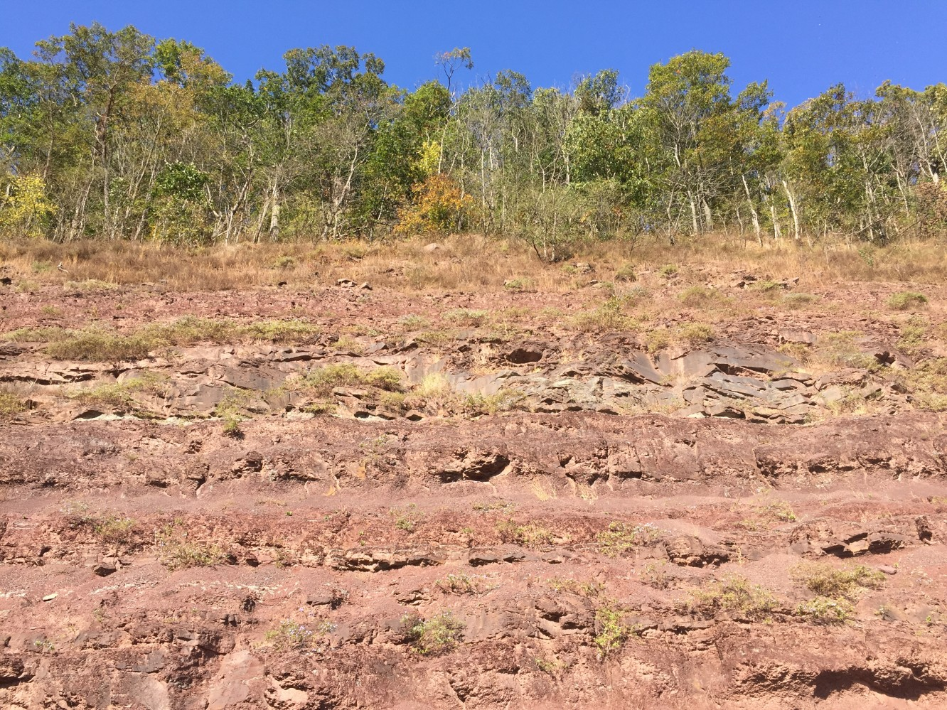 Red Hill Fossils e